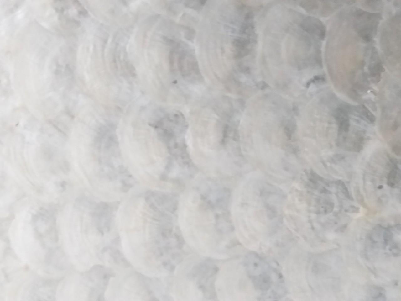 Vỏ con bóng kiếng ép MDF chuyên nghiệp nhất với công nghệ kỹ thuật tiên tiến hiện đại nhất